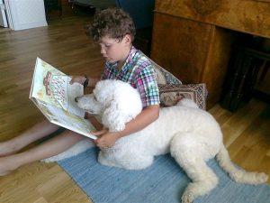 Les for Molly (barn 6-10 år) @ Grimstad bibliotek, barneavdelingen | Aust-Agder | Norge